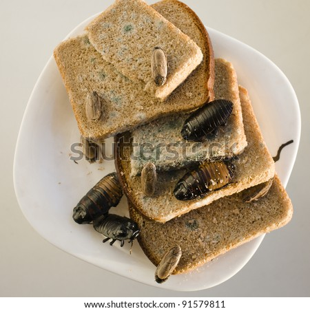 bread on dish infested with roaches and mold