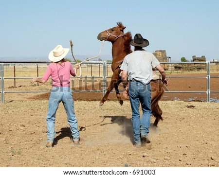 Breaking a young horse for riding.