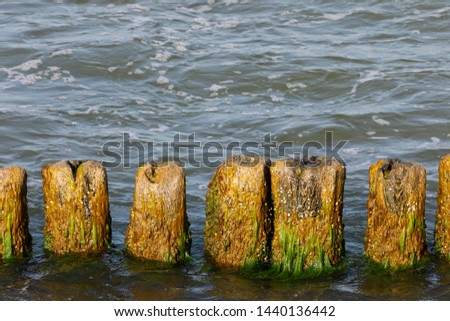 Breakwater poles. These wooden breakwaters serve to protect the coast against the sinister effects of destructive sea waves in Kolobrzeg in Poland #1440136442