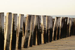 Breakwater Weathered Wooden Poles on the North Sea Beach