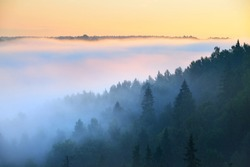 Breathtaking panoramic aerial view of the evergreen pine tree forest and river in a clouds of morning fog. Fairy autumn landscape. Gauja national park, Sigulda, Latvia. Nature, seasons