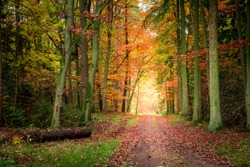 Breathtaking path in the autumn forest, Poland