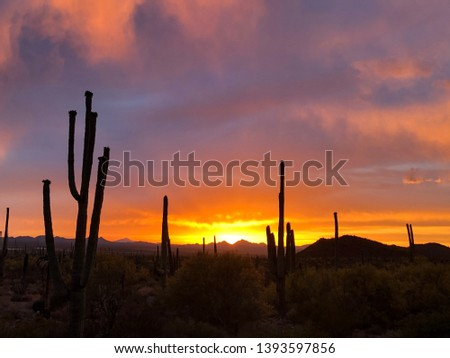 Breathtaking Sunset, Saguaro Cactus Silhouette, and cloudy colorful sky at Saguaro National Park in Southern Arizona.