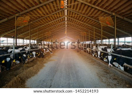 Breeding diary cows in free livestock stall. #1452214193