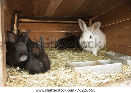 Breeding rabbits on a farm in small boxes
