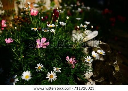 breeze natural  Nature  garden  flower  outdoor  Outdoor activities  Outdoor sports #711920023