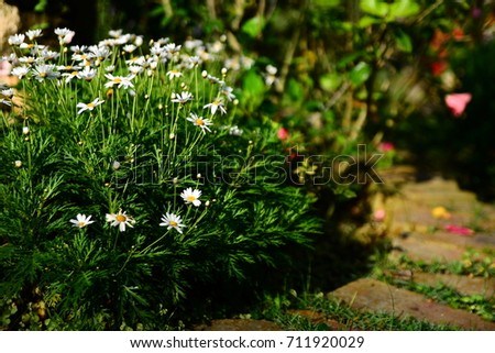 breeze natural  Nature  garden  flower  outdoor  Outdoor activities  Outdoor sports #711920029