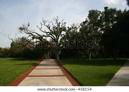 brick and cement path leading to a large oak tree