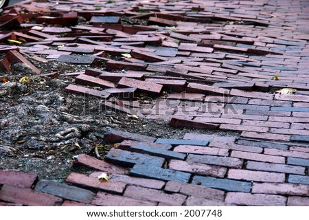 stock-photo-brick-sidewalk-looking-like-waves-as-the-roots-of-a-tree-push-them-up-and-disturbs-the-sidewalk-2007748.jpg