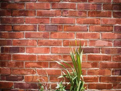 Brick wall texture with green plants, strong vignette and gritty or rustic looking.
