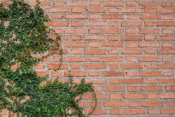 brick wall with Mexican daisy