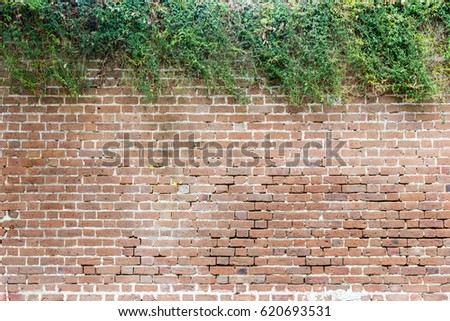 Brick Wall with Natural, Contrasting Hedge for Slide Titles  #620693531