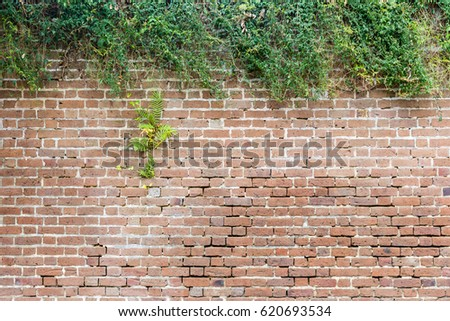 Brick Wall with Natural, Contrasting Hedge for Slide Titles with Protruding Shrub. #620693534