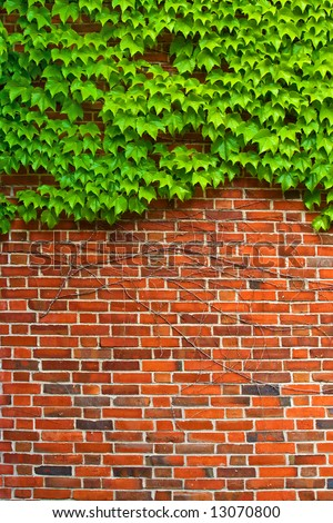 Bricks and Ivy - Hedera