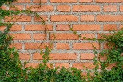 Brickwall texture frame with foliage. Old rustic red block brickwall background.