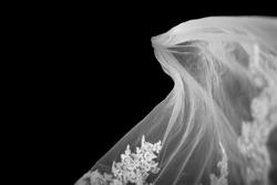 Bridal Veil on Black Background