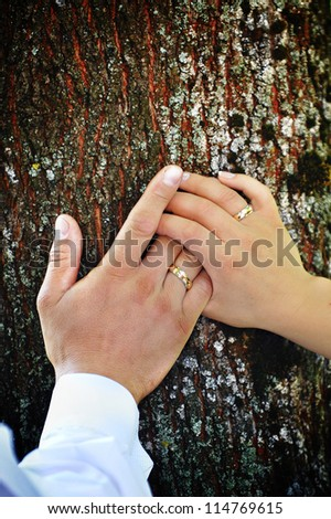 bride and groom hands on  trunk of  tree close up