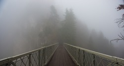 Bridge and Fog in forest