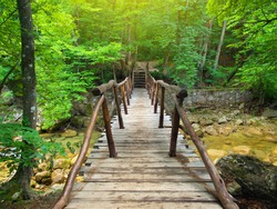 Bridge in bright forest. Natural composition