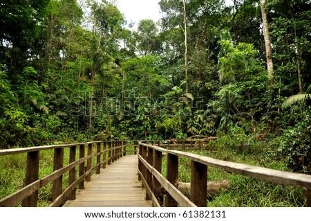 Bridge in the jungle of Costa Rica - stock photo