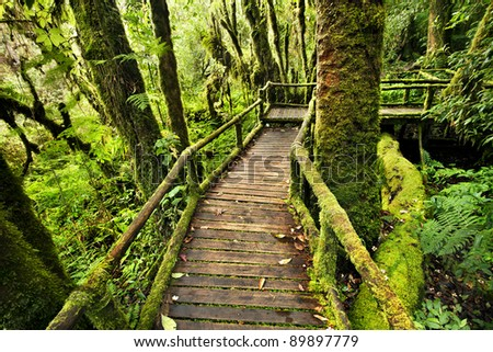 bridge in to the jungle ,thailand - stock photo