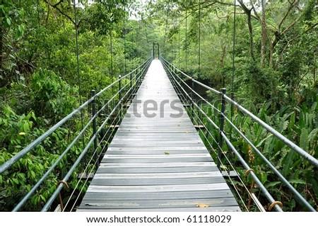 Bridge over the jungle in Costa Rica
