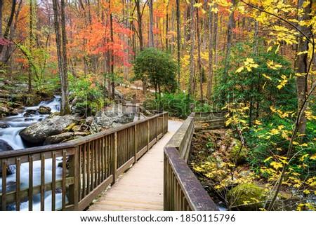 Photo of  Bridge to Anna Ruby Falls, Georgia, USA in autumn.