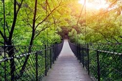 Bridge to the jungle,guilin,china