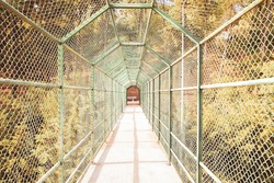 Bridge way for tourists surrounded with green grid. Safety concrete bridge or pathway for crossing river or lake. Green trees of forest on background. Tourism, adventure and summer vacation concept