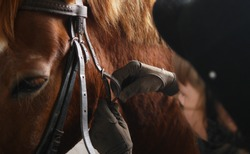 Bridle horse closeup. Fastening the bridle on the horse.