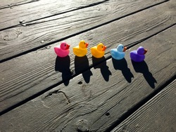 Bright afternoon sun, long shadows and 5 bright colored rubber ducks in a line on a dark wood deck, ducks in a row.
