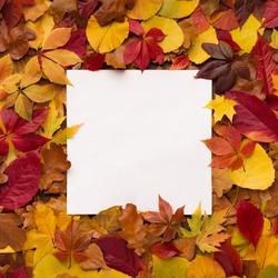 Bright and colorful autumn frame of fallen leaves with white square copy space for advertisement