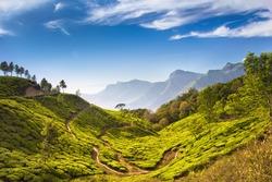 Bright and vivid landscape of green tea plantations in India (Kerala, Munnar).