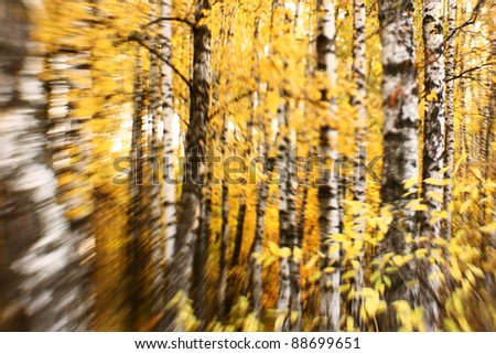 Bright autumn background. Selective focus
