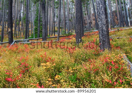 Bright autumn colors in the Lewis and Clark National Forest of central Montana - stock photo