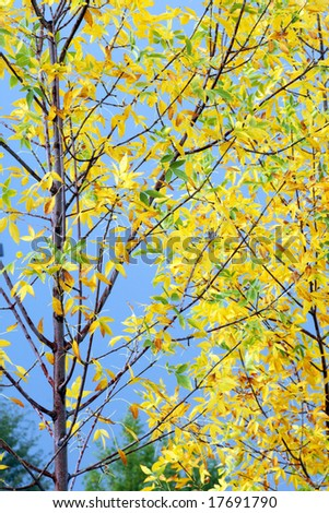 Bright, Autumn Leaves against a Blue Sky