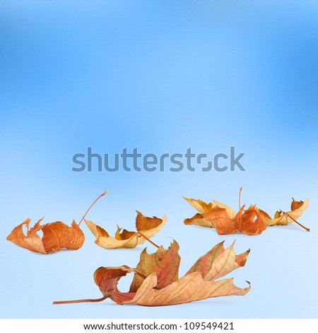 Bright autumn leaves on the abstract background with bokeh - stock photo