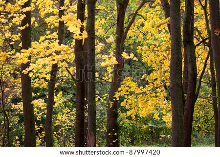 Bright autumn leaves on the branches of a tree in the forest