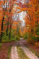 Bright autumn trees along the scenic Adams trail in Michigan upper peninsula