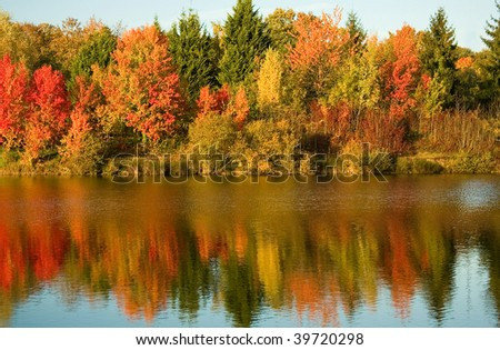 Bright autumn trees with their reflection in water
