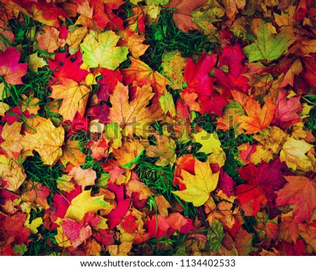 Bright beautiful autumn fallen leaves of maple, ash and other trees, red, yellow, burgundy colors on green grass. Background autumn fallen leaves. Texture autumn fallen leaves. Top view. #1134402533