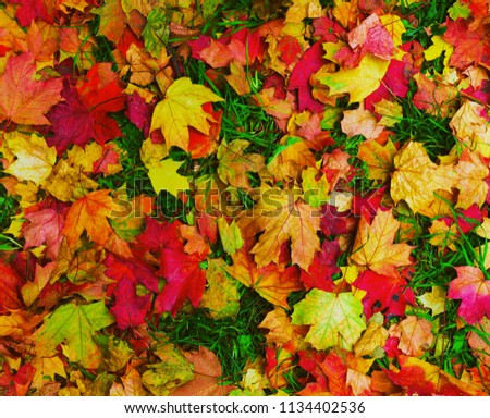 Bright beautiful autumn fallen leaves of maple, ash and other trees, red, yellow, burgundy colors on green grass. Background autumn fallen leaves. Texture autumn fallen leaves. Top view. #1134402536
