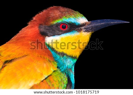 bright beautiful bird isolated on a black background , nature is the best artist, design
