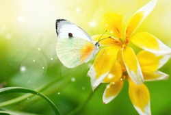 Bright beautiful white butterfly on exotic yellow flower on green background in nature spring summer outdoors close-up macro. Colorful amazing splendid best artistic image harmony of nature.