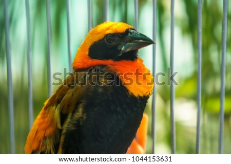 bright bird with black and...