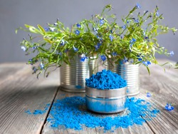 Bright blue colour for Indian holi festival. Colorful gulal (powder color) for Happy Holi with copy space.