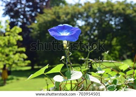 Bright Blue Flower #703954501