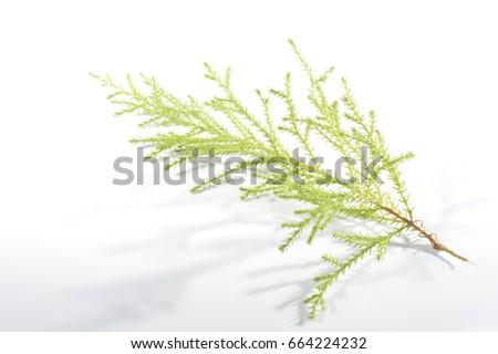 bright branch #664224232