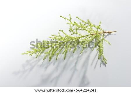 bright branch #664224241