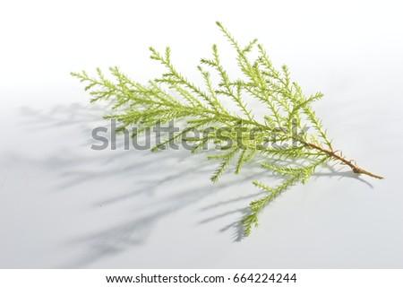 bright branch #664224244